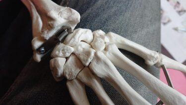 手根骨と頚椎のお勉強