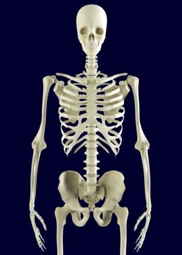 身体の柱となる骨、身体を動かす起点となる関節、忘れてませんか?