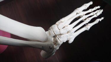 足にはこんなに一杯骨があるんだよ(*^-^*)