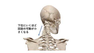 首の痛みの原因はここにあるかも⁉首の構造を知り無理なく動かす方法